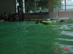 Einführung für angehende Schwimmsportleitende 2003 - Bild  28